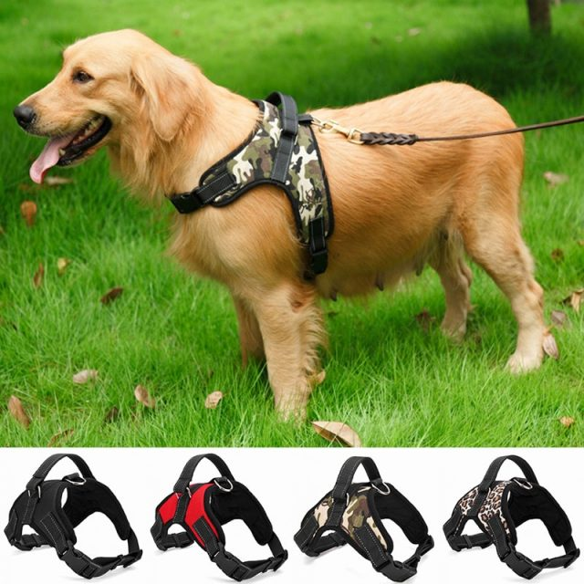 Dog's Casual Nylon Harness